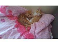 Kittens looking good home