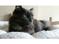 Cat Sitter in Ballymena Area