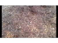 Wood Chip ideal for mulching flower/veg beds and suppressing weeds. Plants & eggs also for sale.
