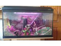 125ltr Fluval aquarium....full set up