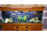 Tropical aquarium for sale including solid oak cabinet.