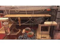 Chinchilla for sale with all accessories cage food treats £100 ono