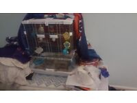 6 month old budgie comes on his own or can be sold with vision cage.