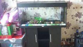 Juwel 180ltr aquarium