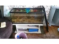 3ft fish tank with light hood and brand new bulb. Can come with stand. Ely cardiff £70