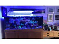 Stunning Marine Aquarium 1000 litre everything included