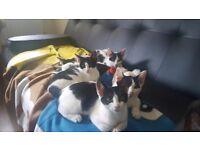 Kittens for free!!!
