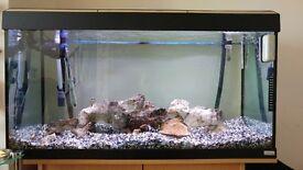 200L fish tank setup