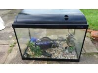 Fish tank with every thing