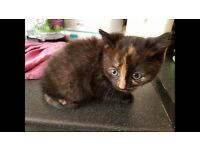 Lovely coloured kitten little boy