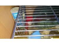 Russian dwarf hamsters for sale