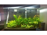 64L Aquarium with Tropical Fish and Fluval 206 filter, heater, lighting