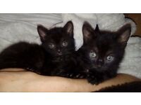 2kitten boys are looking for lovely and worm family
