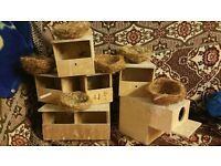 12 x nests and boxes,bengalese,zebra,star,foreign Canary, Gouldian Finch