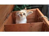 Gorgeous Mix Rabbit