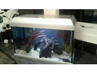 Aquarium 24 x 15x12