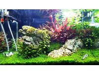 Nano ADA aquarium fully equipped for nature lovers, perfect for your living room or office.