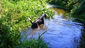 Woofie Wanders, reliable, insured and responsible dog walking service at reasonable rates