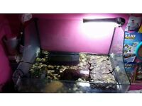 2 Musk Turtles, Tank & Accessories - Ready to go ASAP!