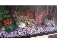 Aquarium with 7 fishes