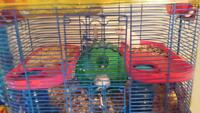 Cage n hampsters