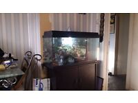 2 and a half foot fish tank with stand for sale