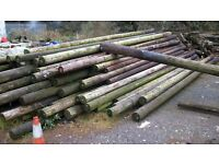 telephone poles wanted, used