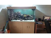 marine fish tank full setup coral and fish also available
