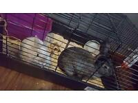 2 rabbits and cage