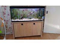 4ft 240 litre fluval fish tank