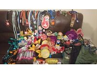 Job lot dog collers , leads ,toys and harness £100
