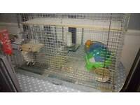 2 Chinchillas and cage