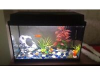 **URGENT** Fish Tank - opened to lowering the price if picked up by Sat 27/05