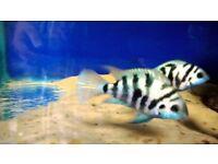 tropical fish ..