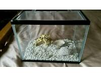 SMALL Fish tank with gravel and irnaments