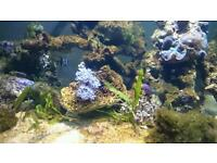Marine tank for sale