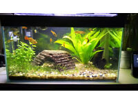 30L fish tank with filter, heater, accessories...etc