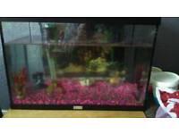 2fish tanks for sale no fish