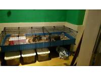 5x2 c and c guinea pig cage with stand and lid