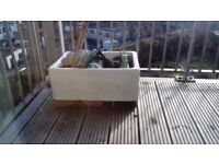 Small white butler sink used for plants. Good condition. Collection walton on thames