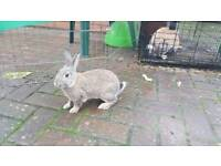 Mummy Rabbit and Baby For Sale