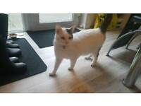 18 mth yr old male cat