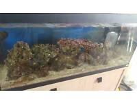 Live rock 30kg marine/reef