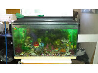 Fish tank with all accessories - just add water & your fish
