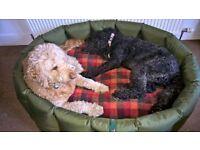***XXL Tuffies Dog Bed***