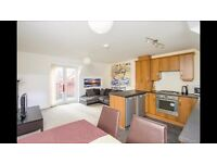 Modern 2 bed semi-detached house to rent flat to rent in Hamilton