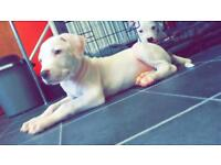 Beautiful puppy's for sale