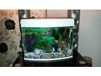 Mood lighting fish tank