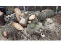FIRE LOGS / WOOD FOR FIRES / LOG BURNERS