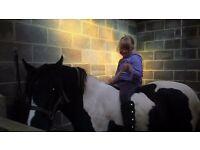 13hh black and white mare